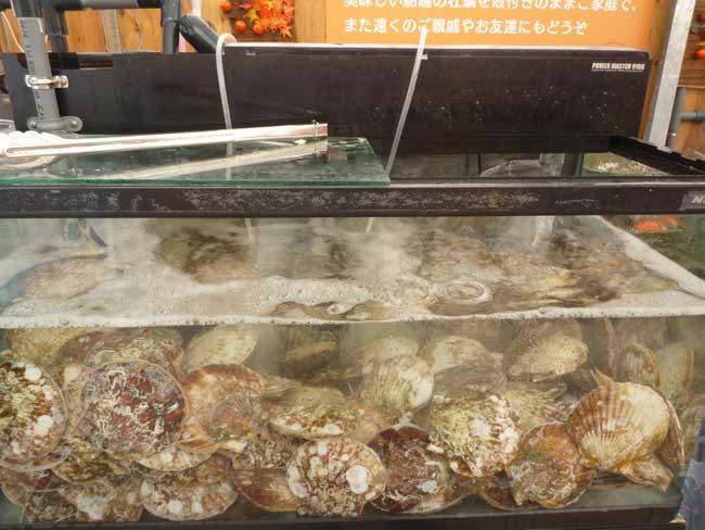 正栄 船越漁港の牡蠣小屋 水槽